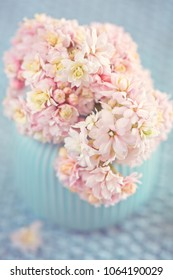 Pink Kalanchoe flowers in a vase. Pastel colors.