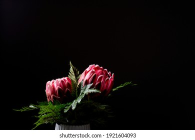 Pink king protea flower bouquet in bloom isolated on a black background