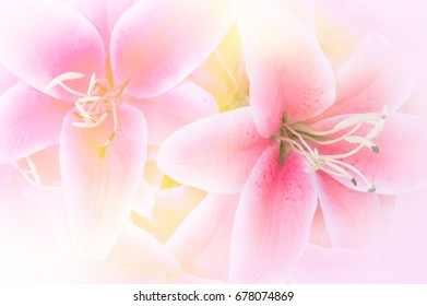 Pink lilies fabric flower background (lily)
