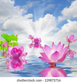 Pink lilies on water