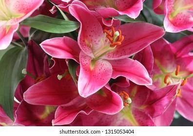 Pink Lillies Closeup