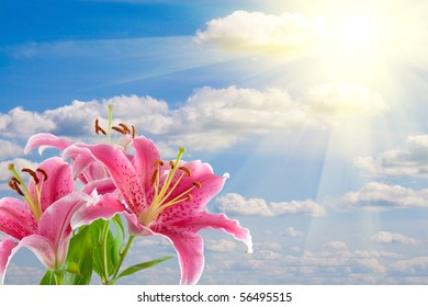Pink lily against the cloudy sky with the sun
