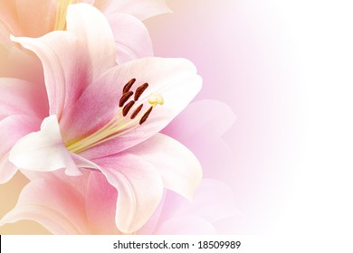 Pink lily background with copy space