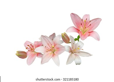 Pink lily flower bouquet isolated on white background