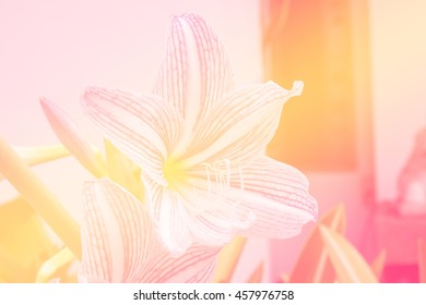 pink lily flower made with blur style