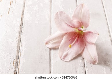 Pink lily flower on wooden background, copy space