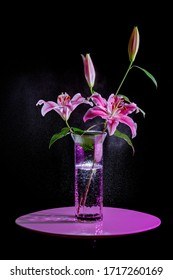 Pink lily flower and splashes with black screen