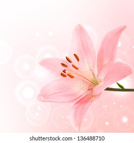 Pink lily on a bokeh light background