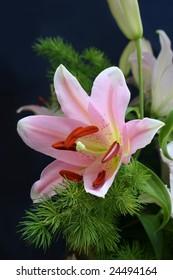 Pink lily on dark