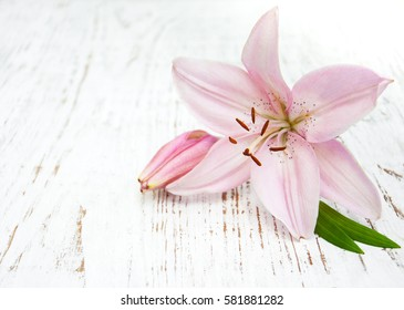 Pink lily on a old wooden background