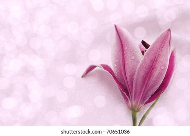 Pink lily on white fabric background.