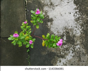 Pink little flowers growing through concrete floor