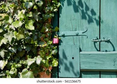 Pink lock on the green wooden door in the garden.