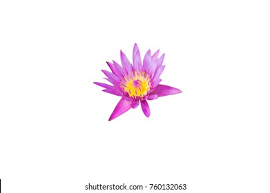 Pink lotus blossoms or water lily flowers blooming on pond,Pink lotus,Pink flower isolated on white background with clipping path