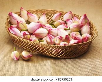 Pink lotus buds in a cane basket