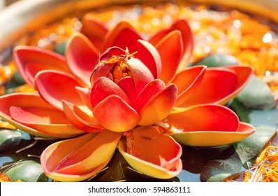 Pink Lotus flower in bowl with fresh water. Sacred plant in Hinduism and Buddhism