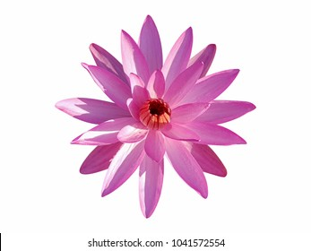 Pink lotus flower isolated on white background for die cut with clipping path