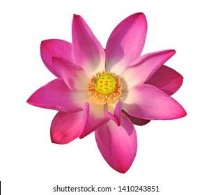 Lotus Top View Images Stock Photos Vectors Shutterstock