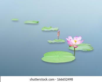 pink lotus flower and leaf