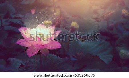 Pink lotus flower lotus flower plants nelumbo stock photo edit now pink lotus flower and lotus flower plantsnelumbo nuciferaindian lotus sacred lotus mightylinksfo
