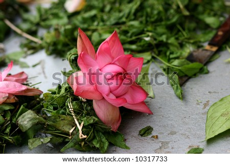 Pink Lotus Flower Used Hindu Celebration Stock Photo Edit Now