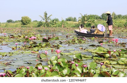 Pink lotus flower view with people