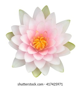 Pink Lotus flower or Water Lilly, Top view with clipping path