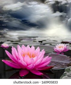 Pink Lotus, Nymphaeaceae in pond. and sky background.