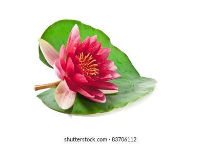 pink lotus on a leaf on white background
