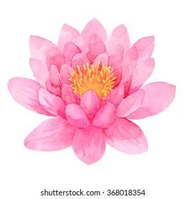 Pink lotus watercolor illustration