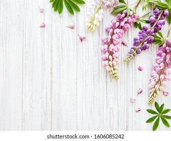 Pink  lupine flowers border on a old wooden background