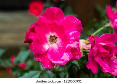 Pink Macro Flower - Shutterstock ID 1210500931