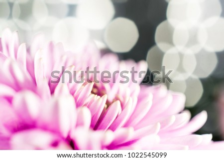 Pink Macro Flower Lights Background Stock Photo Edit Now