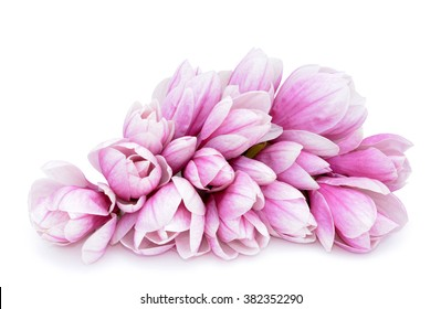 a lot of pink magnolia flower for background uses