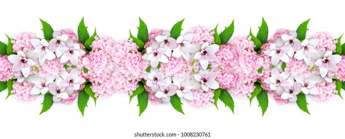 Pink magnolia and hortensia isolated on white background