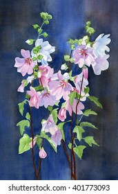 Pink Mallow Flowers with Dark Background.  Watercolor painting with stocks of pink blossoms and leaves with a dark background of blue and brown.