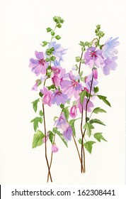 Pink Mallow Flowers.  Watercolor hand painted illustration of pink mallow flowers on long stems with a white background. These flowers resemble hollyhocks.