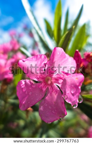 Pink mediterranean flowers on morning sunshine stock photo edit now pink mediterranean flowers on a morning sunshine wet after the rain in sithonia mightylinksfo
