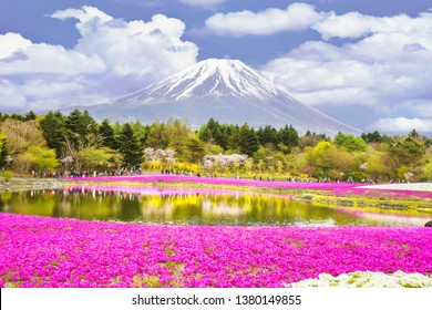 Pink moss field and Mt. Fuji,photo blurred.
