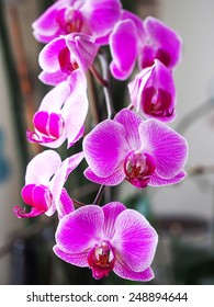 pink natural single flowers orchid
