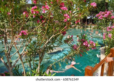 Pink oleander lines the edges of the pool as Russians and other tourists swim in the thermal pools amidst ancient Roman columns of the spa at Pamukkale Turkey