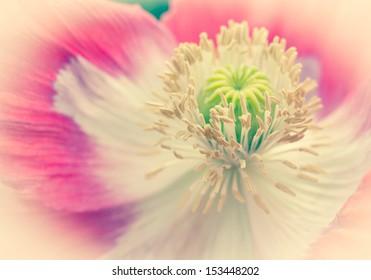 Pink Opium Poppy Deco