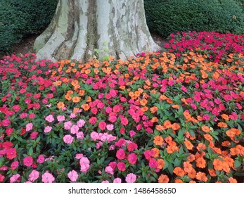 pink and orange flowers near a tree