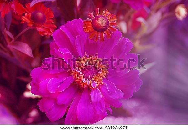 Pink and orange garden summer flowers