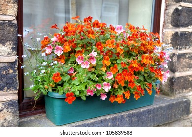 Pink and orange nemesia flowers in a windowbox of an old English stone house.