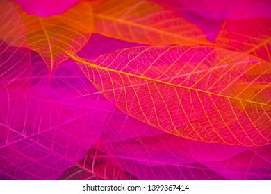 Pink and orange Skeleton leaf abstract background. Dry autumn leaf background