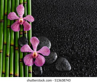 pink orchid with bamboo grove ,stone on wet