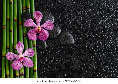 pink orchid and bamboo grove,black stone on wet black background