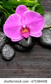 Pink orchid ,bamboo and wet black stones on mat background