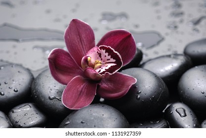 pink orchid and black stones